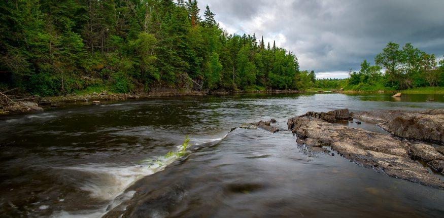 Hvoinyi les na beregu reki v Manitoba